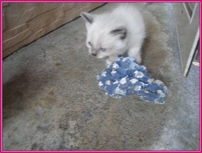 chatons (19)