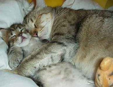 l-amour-maternelle.jpg