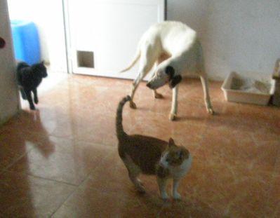 MANIFA-OK-CHAT-ARCA-28-12-2010--1-.jpg