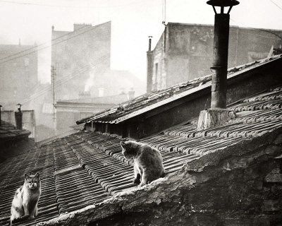 boubat-edouard-cats-on-a-roof-paris-i.jpg