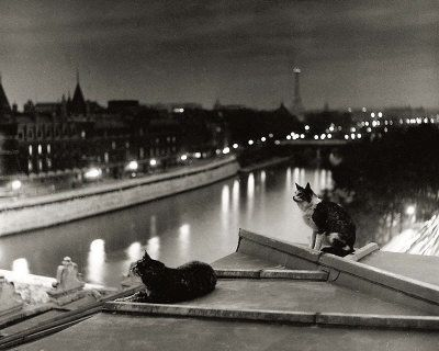 doisneau-robert-paris-cats-at-night.jpg