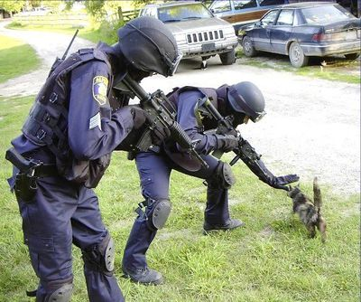 Chat et Policiers : excellent contact - Photo du Net