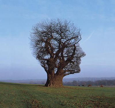 storm-thorgerson-album-cover-art-11