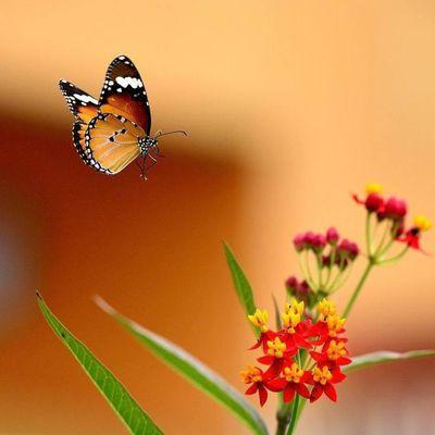 animal-papillon-50.jpg