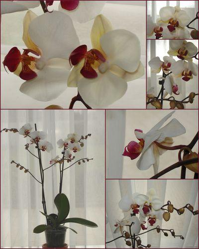 Orchidée 2010