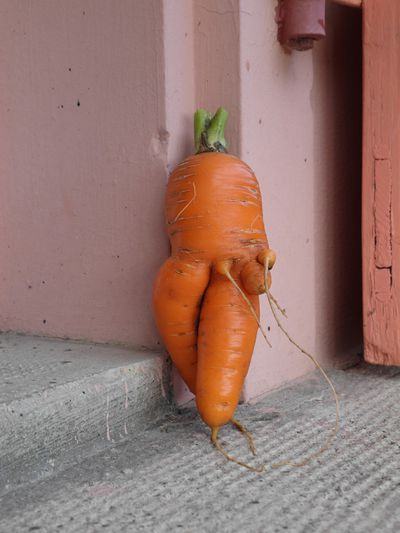carotte3.jpg