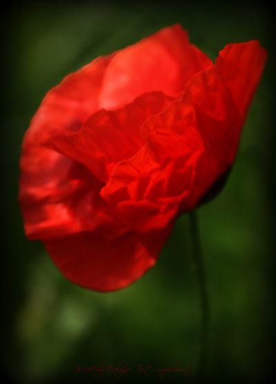 Macro---Fleurs--Plantes--Vegetaux-. 6555