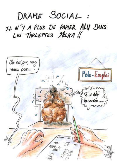 348 - marmotte milka