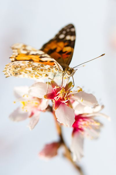 Papillons 500px (7)