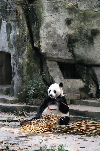 08 Chengdu (09)