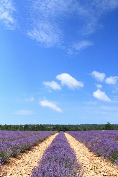Provence 3075.1