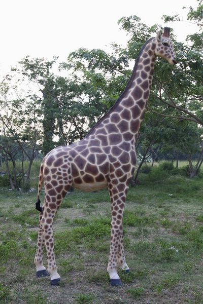 reproduction-girafe-grandeur-nature.jpg