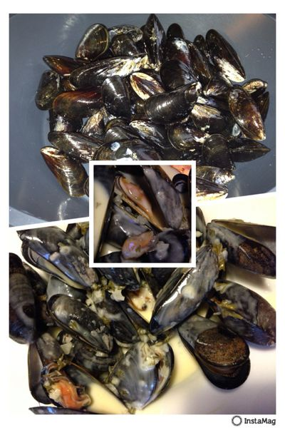 MONTAGE-MOULES.jpg