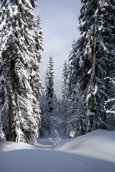 meribel forêt