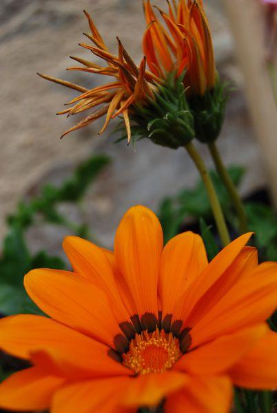 assiettes-fleurs-0084.JPG