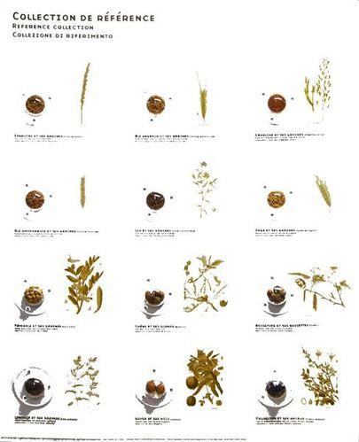 791e graines des cultures gauloises