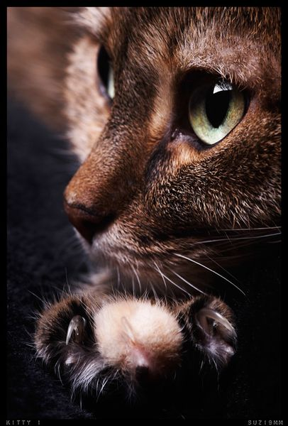 kitty_1_by_suzi9mm.jpg