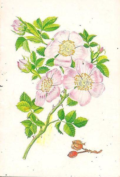 Calendrier-fleurs-1986.jpg