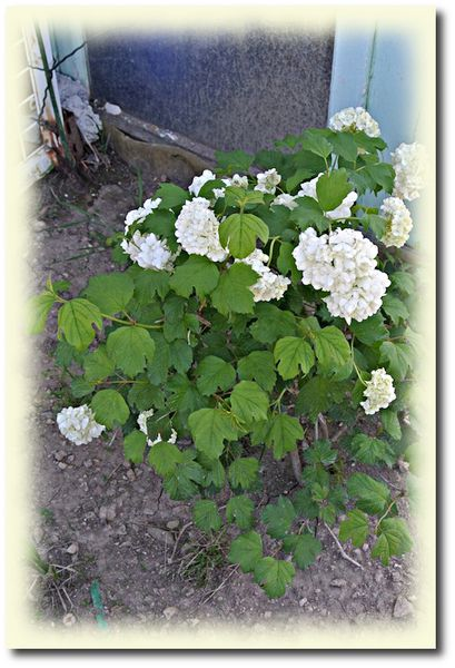 jardin-21-4-2012-3.JPG
