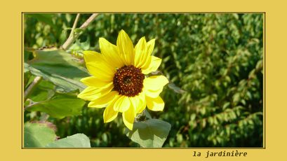 soleildu-jardin.jpg
