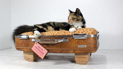valise-chat-bois