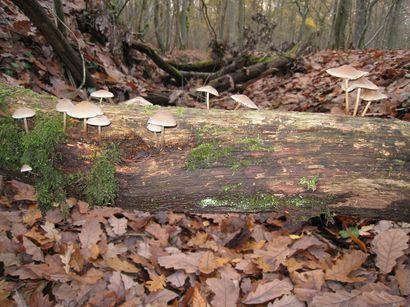 forêt 18-19 novembre 2009 002