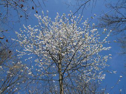 Foret-en-famille-1er-avril-2012-001.jpg