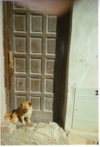 chien-argentin.jpg