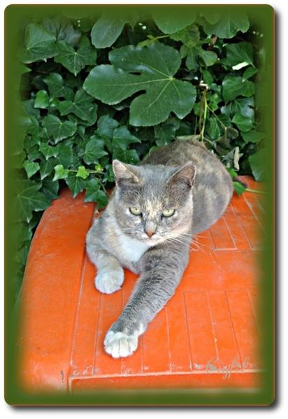 Jardin-14-7-2012-chat-02.jpeg