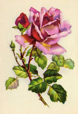 rosesgorgeouspink.jpg