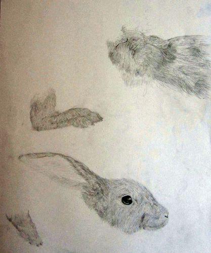 morceaux-lapins