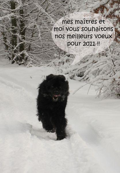 carte-de-voeux-2011.jpg