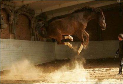 saut-de-cheval.jpg