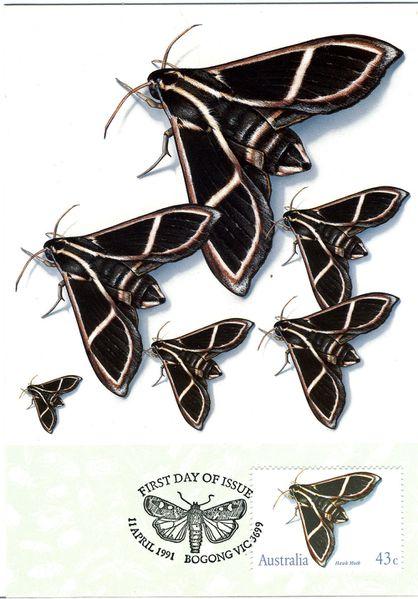 Australie91-fdcpapil-noir-copie-1.jpg