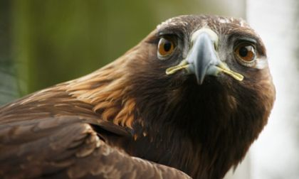 Police investigate bird of prey deaths at Skibo estate