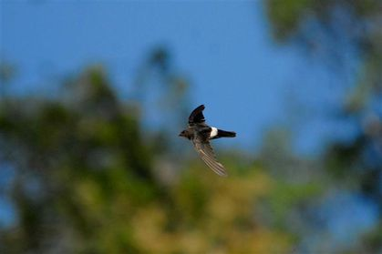 house-swift-frasers-hill--Small--copie-1.jpg
