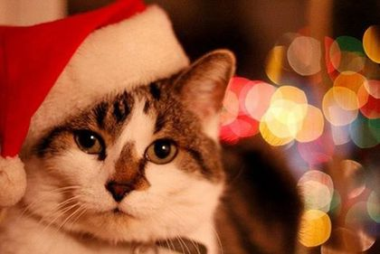 chat-noel-fb-4-dec-14.jpg
