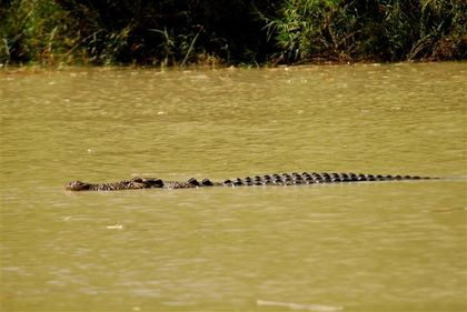 estuarine-croco-kakadu-east-alligator-riv--Small-.jpg