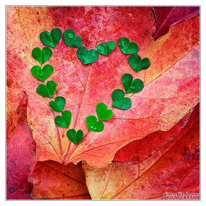 autumn love 2 by dianephotos-d3257nv
