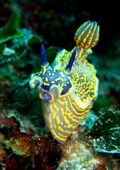 Nudibranches-2 2623zzrecad