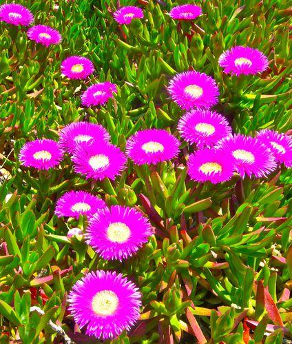 fleurs du sud - le blog de photos et peintures de sonia chappuis