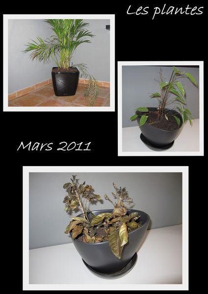 les plantes mars 2011
