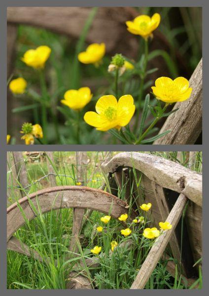 Fleurs des champs à la Ferme de Kerscuntec [800x600]