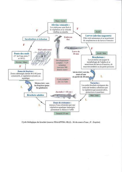cycle brochet