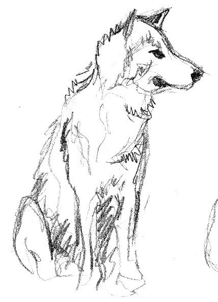 Des vieux croquis i never wanna be old - Croquis animaux ...