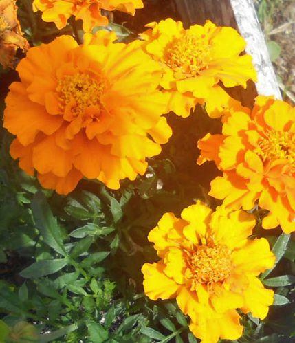 fleurs 009