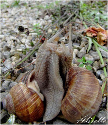 Escargots 8