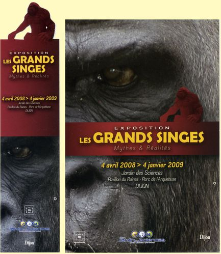 GRANDS-SINGES.JPG