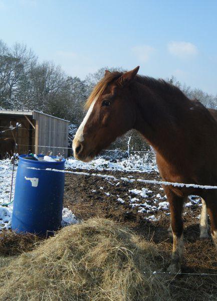 cheval-hiver.JPG
