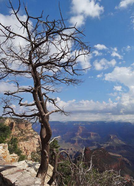 Grand Canyon vue devant hôtel